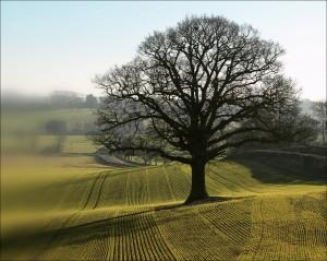 Você não é uma árvore